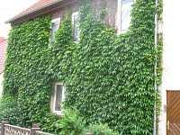 fassadenbegr nung vorteile kletterpflanzen hauswand efeu wandbegr nung. Black Bedroom Furniture Sets. Home Design Ideas