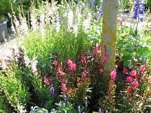 kiesgarten anleitung bepflanzung beispiele fotos bilder. Black Bedroom Furniture Sets. Home Design Ideas