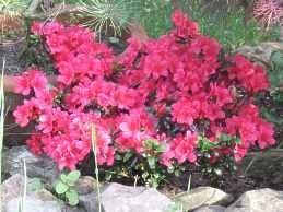 Pflanzen Fur Sauren Boden Moorbeetpflanzen Liste