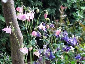 Pflanzen Für Schwere Lehmige Böden
