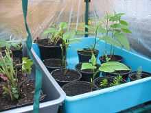 Vermehrung Durch Stecklinge Schneiden Pflanzen Bewurzeln