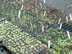 vegetative generative vermehrung von pflanzen vermehren. Black Bedroom Furniture Sets. Home Design Ideas